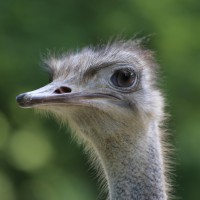 17-06-2015_Tierbilder_Augsburger-Zoo_Poeppel_new-facts-eu0049