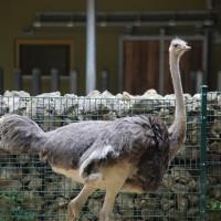 17-06-2015_Tierbilder_Augsburger-Zoo_Poeppel_new-facts-eu0051