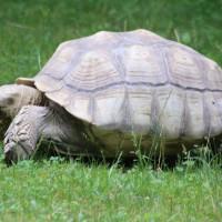 17-06-2015_Tierbilder_Augsburger-Zoo_Poeppel_new-facts-eu0053