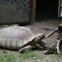 17-06-2015_Tierbilder_Augsburger-Zoo_Poeppel_new-facts-eu0054