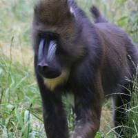 17-06-2015_Tierbilder_Augsburger-Zoo_Poeppel_new-facts-eu0055