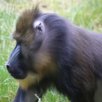 17-06-2015_Tierbilder_Augsburger-Zoo_Poeppel_new-facts-eu0056