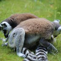 17-06-2015_Tierbilder_Augsburger-Zoo_Poeppel_new-facts-eu0058