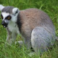 17-06-2015_Tierbilder_Augsburger-Zoo_Poeppel_new-facts-eu0059