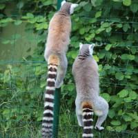 17-06-2015_Tierbilder_Augsburger-Zoo_Poeppel_new-facts-eu0060