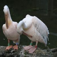 17-06-2015_Tierbilder_Augsburger-Zoo_Poeppel_new-facts-eu0065