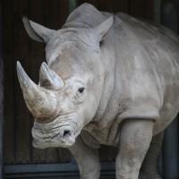 17-06-2015_Tierbilder_Augsburger-Zoo_Poeppel_new-facts-eu0067
