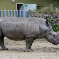 17-06-2015_Tierbilder_Augsburger-Zoo_Poeppel_new-facts-eu0068