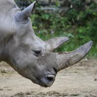 17-06-2015_Tierbilder_Augsburger-Zoo_Poeppel_new-facts-eu0069
