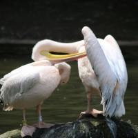 17-06-2015_Tierbilder_Augsburger-Zoo_Poeppel_new-facts-eu0070