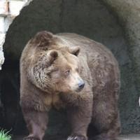 17-06-2015_Tierbilder_Augsburger-Zoo_Poeppel_new-facts-eu0075
