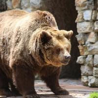 17-06-2015_Tierbilder_Augsburger-Zoo_Poeppel_new-facts-eu0076