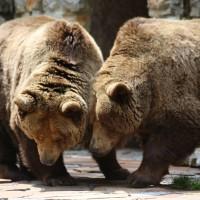 17-06-2015_Tierbilder_Augsburger-Zoo_Poeppel_new-facts-eu0077