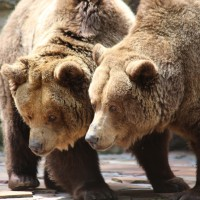17-06-2015_Tierbilder_Augsburger-Zoo_Poeppel_new-facts-eu0078