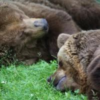 17-06-2015_Tierbilder_Augsburger-Zoo_Poeppel_new-facts-eu0079