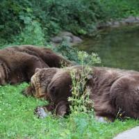 17-06-2015_Tierbilder_Augsburger-Zoo_Poeppel_new-facts-eu0080