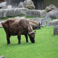 17-06-2015_Tierbilder_Augsburger-Zoo_Poeppel_new-facts-eu0085