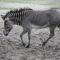 17-06-2015_Tierbilder_Augsburger-Zoo_Poeppel_new-facts-eu0088