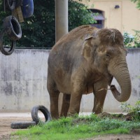 17-06-2015_Tierbilder_Augsburger-Zoo_Poeppel_new-facts-eu0092