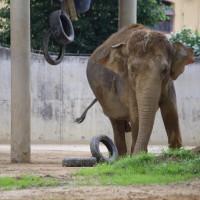 17-06-2015_Tierbilder_Augsburger-Zoo_Poeppel_new-facts-eu0093
