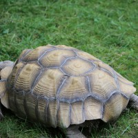17-06-2015_Tierbilder_Augsburger-Zoo_Poeppel_new-facts-eu0096