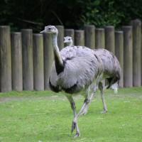 17-06-2015_Tierbilder_Augsburger-Zoo_Poeppel_new-facts-eu0097