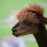 17-06-2015_Tierbilder_Augsburger-Zoo_Poeppel_new-facts-eu0102