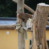 17-06-2015_Tierbilder_Augsburger-Zoo_Poeppel_new-facts-eu0103