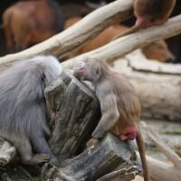 17-06-2015_Tierbilder_Augsburger-Zoo_Poeppel_new-facts-eu0104