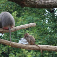 17-06-2015_Tierbilder_Augsburger-Zoo_Poeppel_new-facts-eu0105