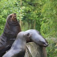 17-06-2015_Tierbilder_Augsburger-Zoo_Poeppel_new-facts-eu0115
