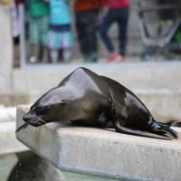 17-06-2015_Tierbilder_Augsburger-Zoo_Poeppel_new-facts-eu0116