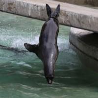 17-06-2015_Tierbilder_Augsburger-Zoo_Poeppel_new-facts-eu0117