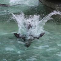 17-06-2015_Tierbilder_Augsburger-Zoo_Poeppel_new-facts-eu0118