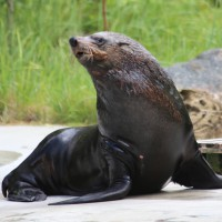 17-06-2015_Tierbilder_Augsburger-Zoo_Poeppel_new-facts-eu0120