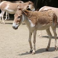 17-06-2015_Tierbilder_Augsburger-Zoo_Poeppel_new-facts-eu0123