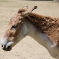 17-06-2015_Tierbilder_Augsburger-Zoo_Poeppel_new-facts-eu0124