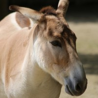 17-06-2015_Tierbilder_Augsburger-Zoo_Poeppel_new-facts-eu0126
