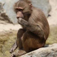 17-06-2015_Tierbilder_Augsburger-Zoo_Poeppel_new-facts-eu0128