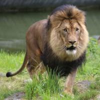 17-06-2015_Tierbilder_Augsburger-Zoo_Poeppel_new-facts-eu0130