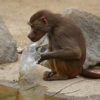 17-06-2015_Tierbilder_Augsburger-Zoo_Poeppel_new-facts-eu0132