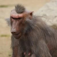 17-06-2015_Tierbilder_Augsburger-Zoo_Poeppel_new-facts-eu0133