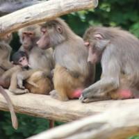 17-06-2015_Tierbilder_Augsburger-Zoo_Poeppel_new-facts-eu0135