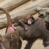 17-06-2015_Tierbilder_Augsburger-Zoo_Poeppel_new-facts-eu0139