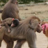17-06-2015_Tierbilder_Augsburger-Zoo_Poeppel_new-facts-eu0140