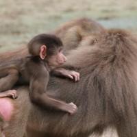 17-06-2015_Tierbilder_Augsburger-Zoo_Poeppel_new-facts-eu0142