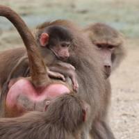 17-06-2015_Tierbilder_Augsburger-Zoo_Poeppel_new-facts-eu0143
