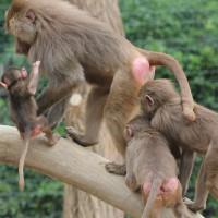 17-06-2015_Tierbilder_Augsburger-Zoo_Poeppel_new-facts-eu0144