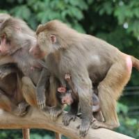 17-06-2015_Tierbilder_Augsburger-Zoo_Poeppel_new-facts-eu0146