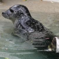 17-06-2015_Tierbilder_Augsburger-Zoo_Poeppel_new-facts-eu0152